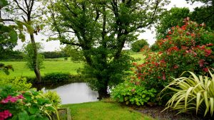 gardens-plants-flowers-pond-nature
