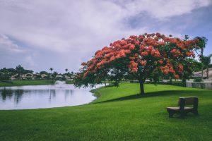 Park-tree-river